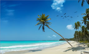 Aruba Surf Club Timeshare Rentals